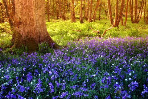 bluebells waterloo machen caerphilly